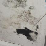 8 hilldale 2012-11-06 007